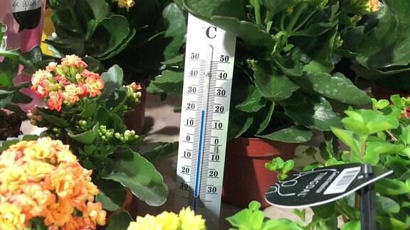 Ein Thermometer zwischen Zimmerpflanzen