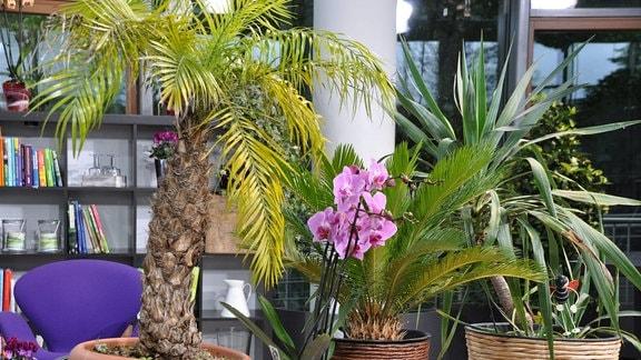 Verschiedene Pflanzen stehen in Blumentöpfen nebeneinander.