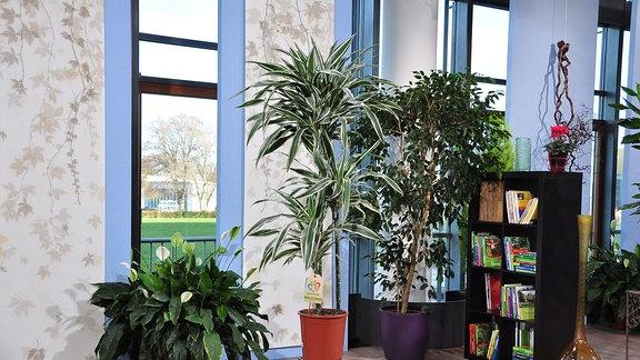 eine Baum mit grün-weißen Blättern steht auf einem Hocker aus Eisen in einem Raum mit anderen Pflanzen und einem Regal