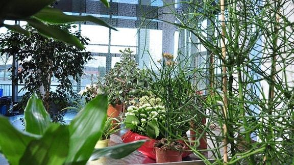 Blick auf verschieden, grüne Zimmerpflanzen in Töpfen