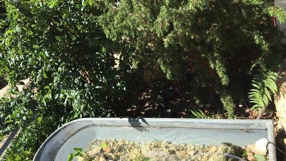 eine alte Zinkwanne mit Steinen, Wasserpflanzen und einer Wasserpumpe in einem Garten
