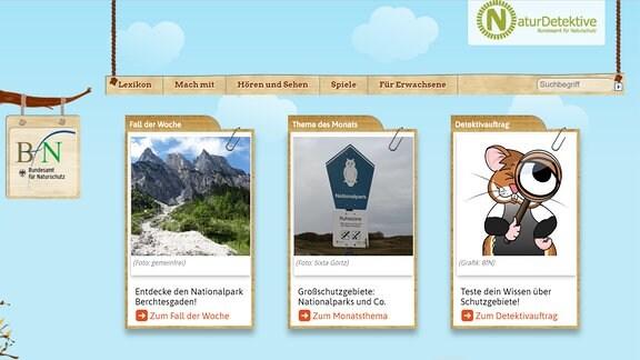 Startseite von naturdetektive.de