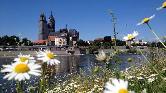 Stadtansicht von Magdeburg - mit Elbe und Dom
