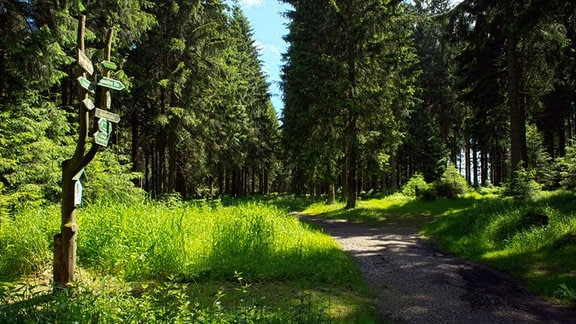Ein Wanderweg im Wald