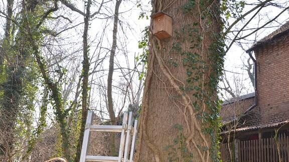 An einer Leiter lehnt ein Baum. An dem Baum hängt ein Nistkasten