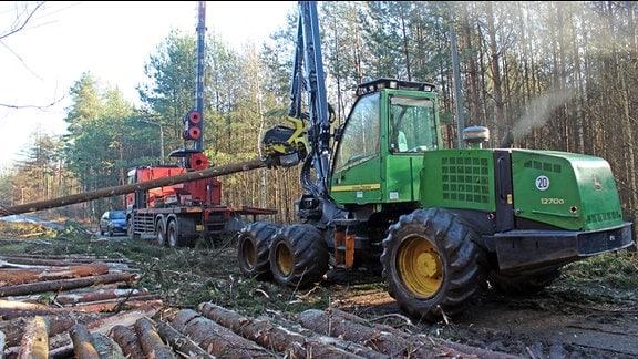 Maschinen der Forstwirtschaft für die Holzernte stehen neben Stämmen von gefällten Bäumen, die auf dem Waldboden liegen.