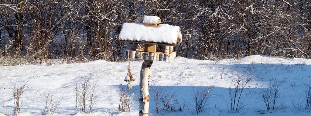 Was Brauchen Vogel Im Winter Mdr De