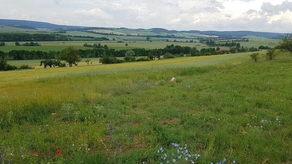 Blick ins Frankenhäuser Tal