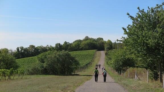 Ein Weg durch einen Weinberg