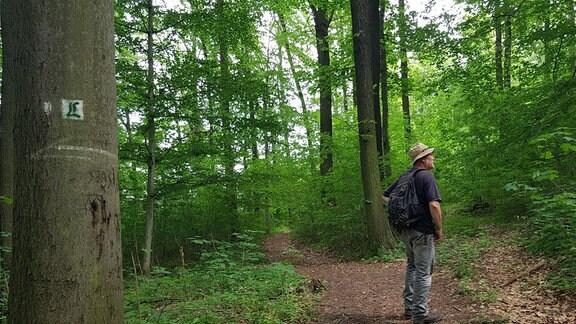 Ein Wanderer im Wald