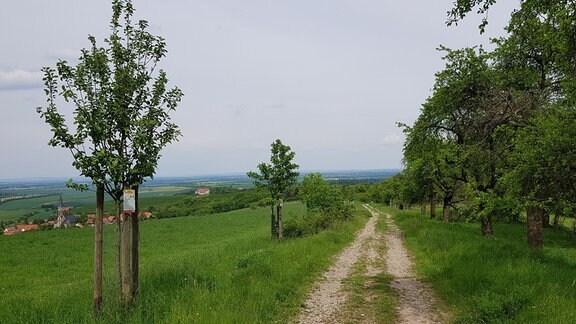 Bäume an einem Weg