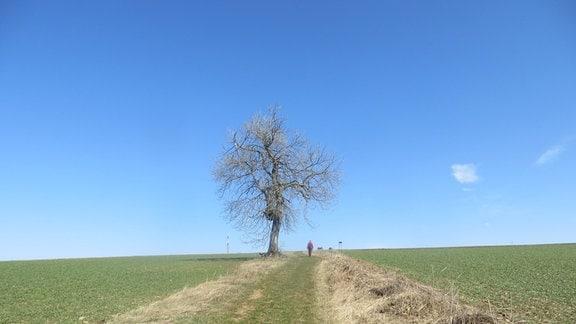Ein Baum an einem Weg