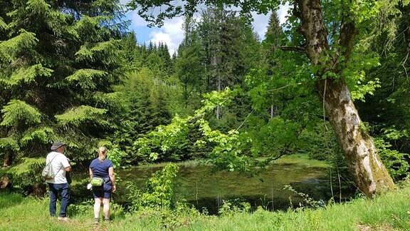 Ein kleiner Teich im Wald