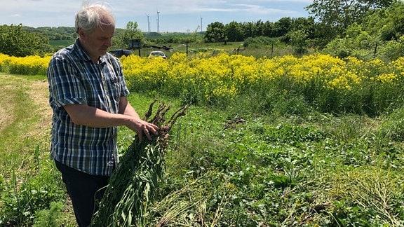 Wolfram Voigt vom Naturschutzverein Saale-Holzland hält eine getrocknete Zackenschote-Pflanze in der Hand.