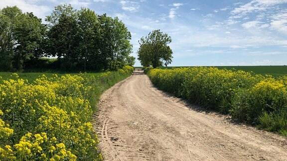 Ein Weg eingesäumt von Zackenschoten.