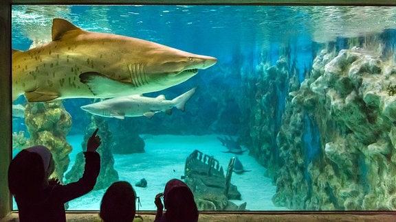 Kinder betrachten Haie einem Aquarium