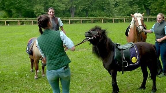 Von Rindern und Rennpferden - Neues aus dem Gestüt Graditz