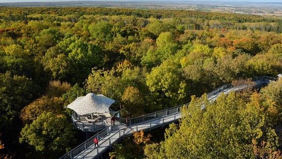 Baumkronenpfad im Herbstwald im Nationalpark Hainich