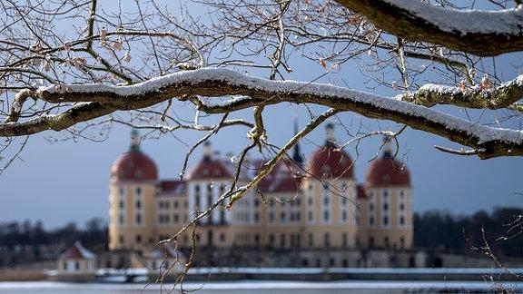 Schnee liegt auf den Bäumen im Moritzburger Schlosspark. Im Hintergrund ist das Schloss zu sehen.