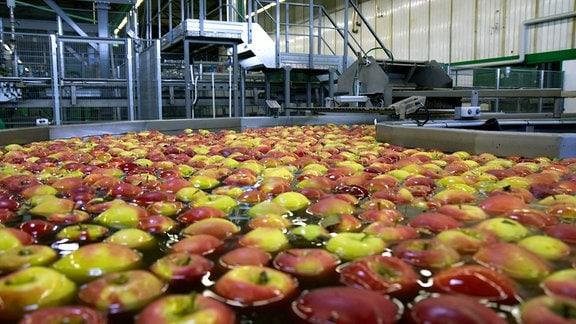 Äpfel lagern übers ganze Jahr
