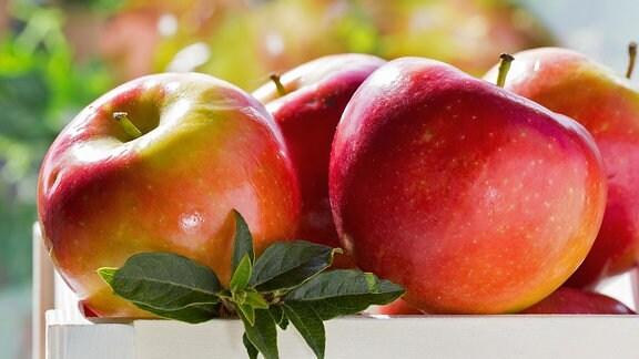 Äpfel der Sorte Winesap