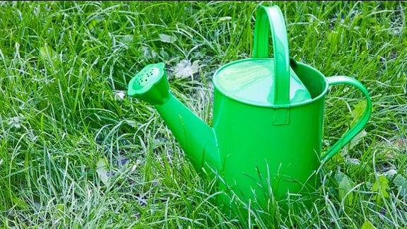 Eine Gießkanne steht im Gras