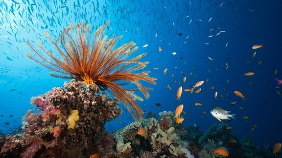 Korallen und Fische am Great Barrier Reef vor Australien