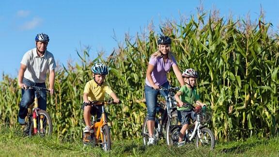 Familie radelt - Vater, Mutter und zwei Söhne vor einem Maisfeld.