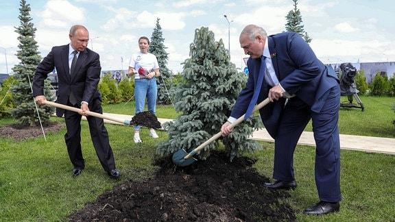 Der russische Präsident Wladimir Putin und Belarus Präsident Alexander Lukashenko pflanzen einen Baum am 30.06.2020