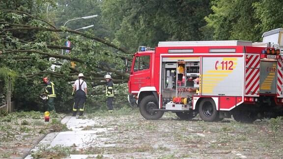 Feuerwehr räumt umgestürzten Baum von einer Straße.
