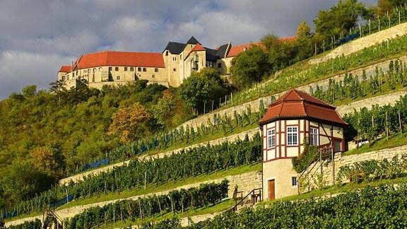 Weinberg bei Freyburg unterhalb der Neuenburg Saale-Unstrut
