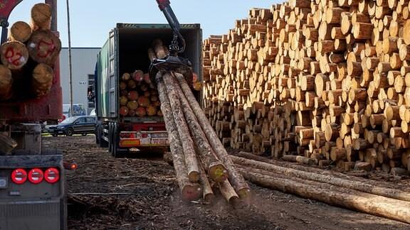 Fichtenholz wird zum Transport in Überseecontainer verladen
