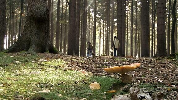 Pilz mit Sammlern im Wald.