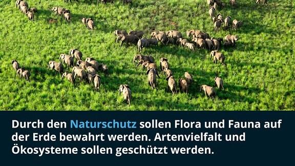 Elefanten in einem Nationalpark