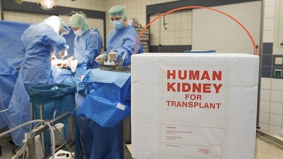 Transportbox für eine Niere bei einer Nierentransplantation.