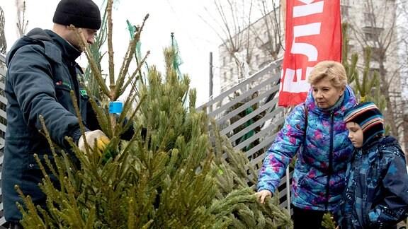 Menschen suchen einen Weihnachtsbaum aus