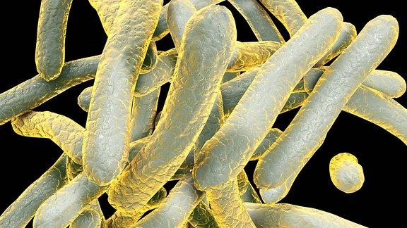 Illustration von Tuberkulose-Bakterien