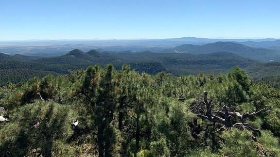 Blick in den Gila National Forest
