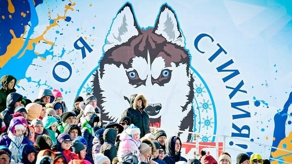 Husky Sibirien