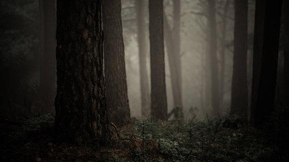Ein unheimlicher Wald