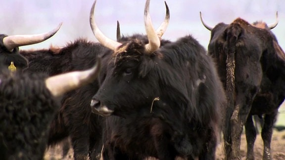 Tote Rinder im Naturschutzgebiet