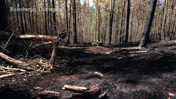 Wald Trockenheit