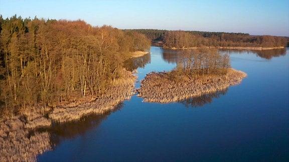 Eine Uferzone mit Wald und Schilf.