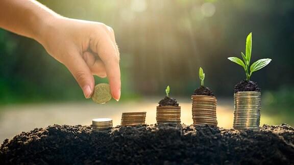 Pflanzen wachsen auf gestapelten Satang-Münzen