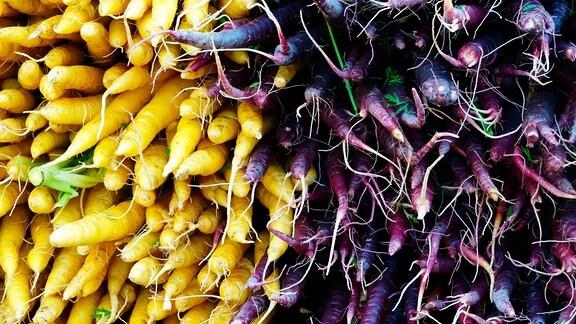 gelbe und lilafarbene Möhren
