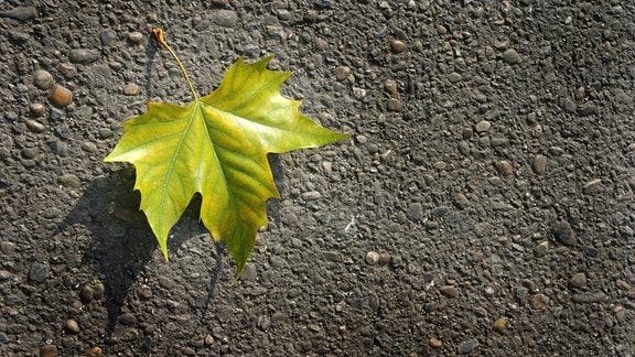 Abgefallenes Blatt liegt auf der Straße