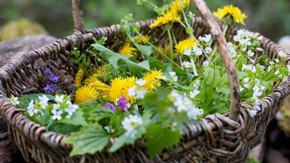 gesammelte Frühlingskräuter in einem Korb