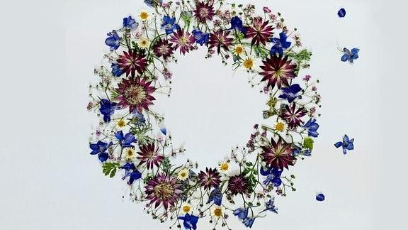 Blüten pressen mit Judith Heinze