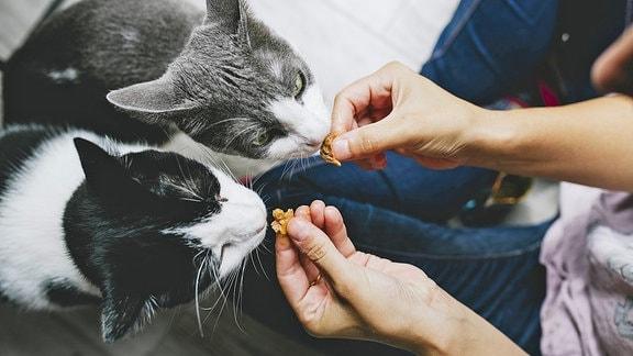 Eine Frau füttert zwei Katzen