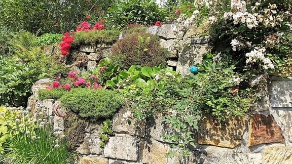 Vickys Gartenparadiese - Sandsteingarten